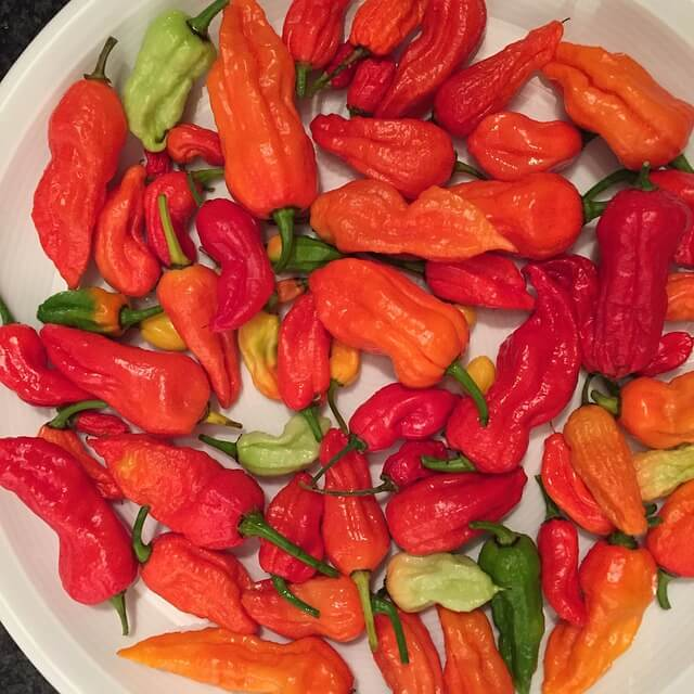 Ghost Pepper (Bhut Jolokia)